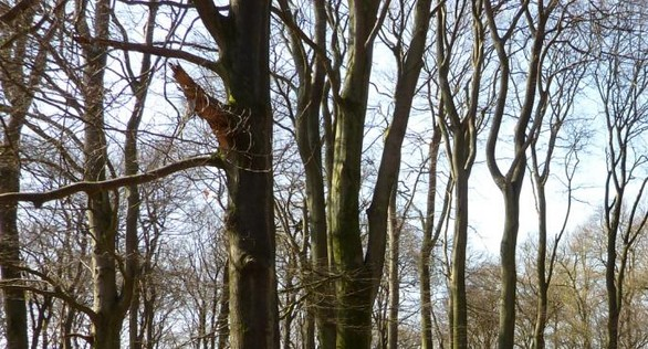 Persoonlijke ontvangst op landgoed en natuurbegraafplaats Weverslo