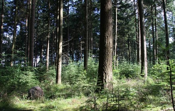 Toch crematorium Hoogeveen ondanks mislukte aanbesteding