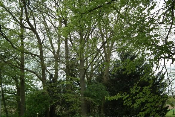 Zondag 31 mei: Inspiratiedag Natuurbegraafplaats Hillig Meer