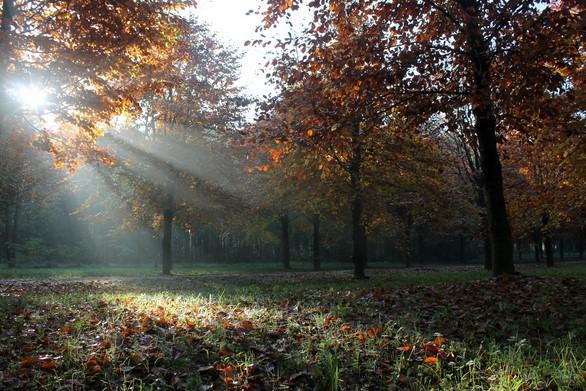 natuurbegraafplaats Hillig Meer mag uitbreiden met 1000 graven
