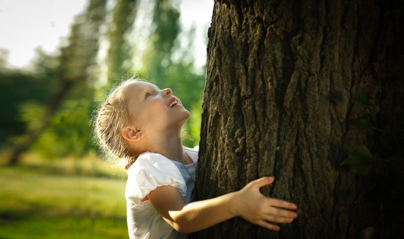 Mijn-boom: een levende herinnering